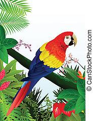 macaw, oiseau, forêt, exotique