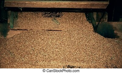 machine., vieux, bois, tamiser, grain, sifted, closeup, tomber