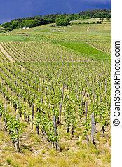 maconnais, vignobles, cote, france