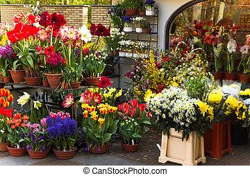 magasin, fleurs ressort, fleuriste, coloré