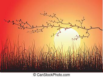 magie, coucher soleil