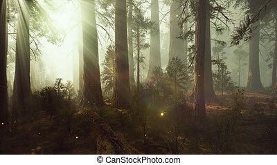 magique, fantasme, forêt, luciole, lumières