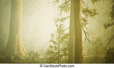 magique, fantasme, luciole, lumières, forêt