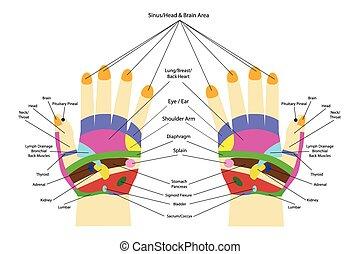 main, acupunture, -