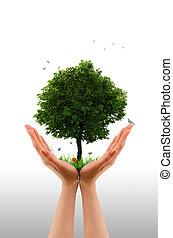 main, vivant, arbre, -