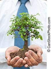 mains, arbre, homme affaires