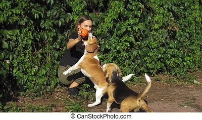 mains, jouet, saut, femme heureuse, master., jeux, deux, briquets, chiens, concept., dogs.