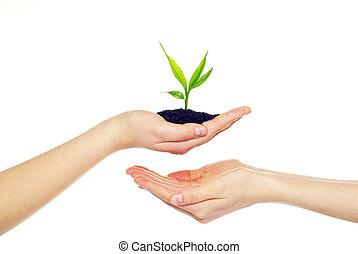 mains, plante