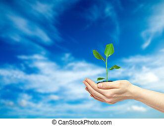 mains, plante, tenue, vert
