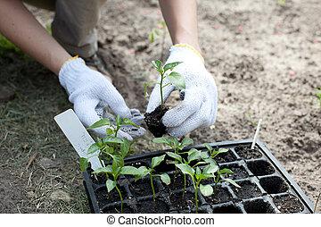 mains, tenue, petit, vert, humain, plante