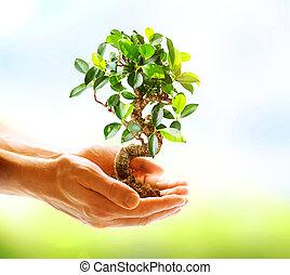 mains, tenue, sur, fond, vert, humain, nature, plante