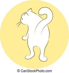 maison, chat blanc