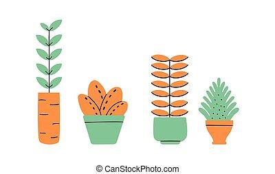 maison, fleurs, usines, collection., vases., pots fleurs