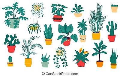 maison, intérieur, cactus., désert, main, exotique, céramique, dessiné, fleurs, vecteur, plants., succulent, ensemble, monstera., pots., paumes, isolé, arbre vert, décoration, maison, ficuses, intérieur