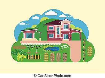 maison, yard, jardin
