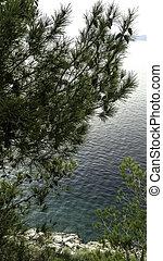 makarska, fond, -, arbre, pin, dalmatie, adriatique, croatie, riviera, brela, mer, croate
