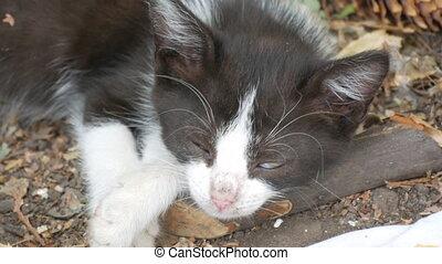malade, sommeil, sdf, blanc, rue, noir, chaton