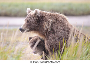 maman, petit, ours