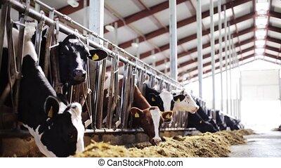 manger, ferme, troupeau, étable, foin, laitage, vaches