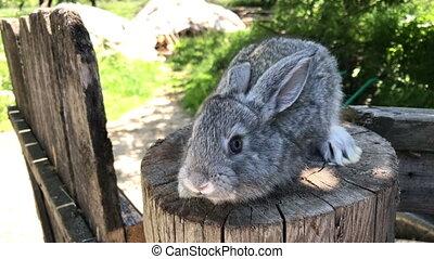 manor., lapins, 7, museau, rabbits., close-up., entrepreneur, individu, plus, iphone, lapin, tenue, croissant, vidéo, sien, coup