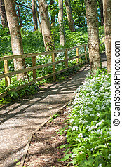 marche, bois, printemps, parc, vert, sentier