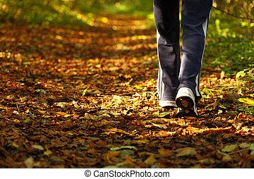 marche, femme, pays, croix, automne, piste, forêt