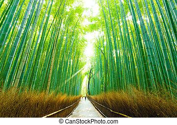 marche, gens, matin, forêt, arashiyama, bambou