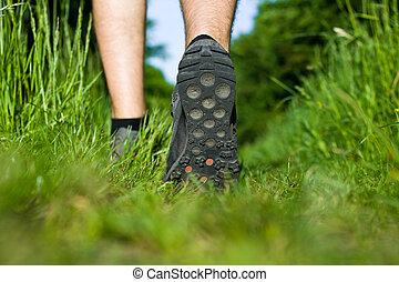 marche, herbe, forêt verte, homme