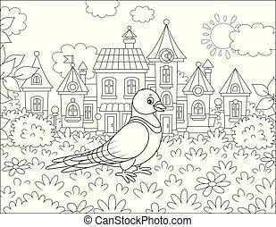 marche, herbe, pigeon