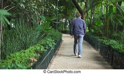 marche, homme, entouré, sentier, arbres, parc