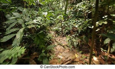 marche, jungle