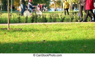 marche, parc, holidays., gens