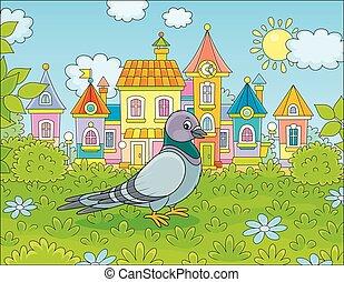marche, pigeon, herbe, gris