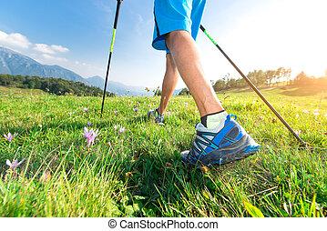 marche, pré, printemps, promenade, polonais, nordique, fleurs