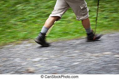 marche, sien, beau, retraite, forêt, homme, dehors, aîné actif, apprécier, sentier, nordique