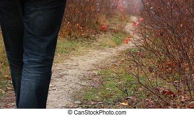 marche, solitaire, forêt, homme
