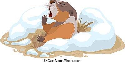 marmotte amérique, jour
