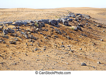 maroc, sahara, fossile, vieux