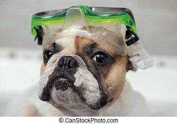 masque pour plongée sousmarine, chien