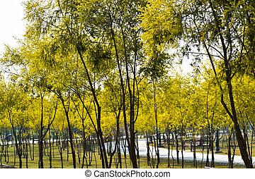 matin, frais, arbre, plant., beau, herbe, champ vert, lumière