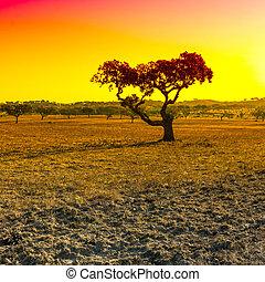 matin, tôt, portugal