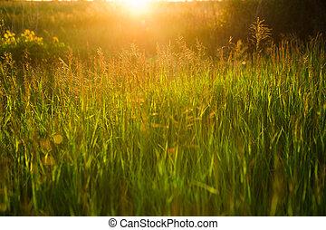 me, été, nature, printemps, résumé, fond, herbe, ou
