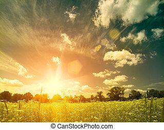 meadow., été, beauté naturelle, sur, arrière-plans, clair, coucher soleil, sauvage, camomille, fleurs