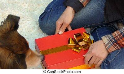 mensonge, biscuits, ouvre, chien, cadeau