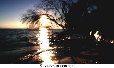 mer, coucher soleil, arbre