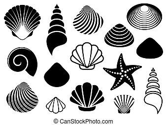 mer, etoile mer, coquilles