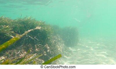 mer, marin, vie sous-marine