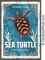 mer, récifs, tortue, océan, corail