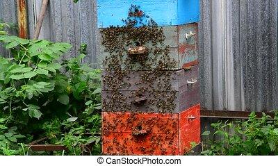 miel, abeilles, jardin, ruche