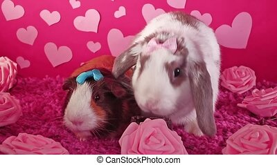 mignon, animaux, lapin, animal, chouchou, s, valentin, tailler, animaux familiers, cochon inde, jour